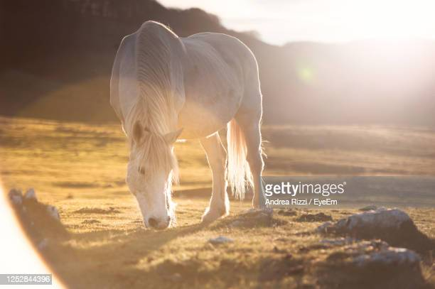 horse standing on the field - andrea rizzi foto e immagini stock