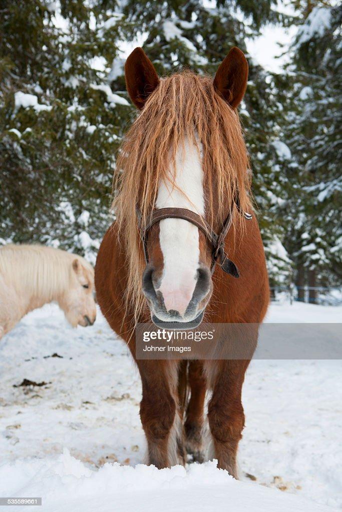 Horse standing : Stock Photo