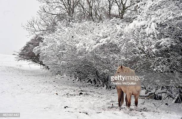 A horse stands against the sleet and snow on January 29 2015 in Belfast United Kingdom Continued snow fall and freezing conditions are affecting the...