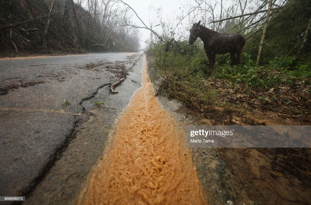 A horse stands along a roadside as rainwater flows more than two weeks after Hurricane Maria hit the island, on October 9, 2017 in Jayuya, Puerto Rico. Most of the municipality is without water or power. Only 15 percent of Puerto Rico's grid electricity has been restored. Puerto Rico experienced widespread damage including most of the electrical, gas and water grid as well as agriculture after Hurricane Maria, a category 4 hurricane, swept through.
