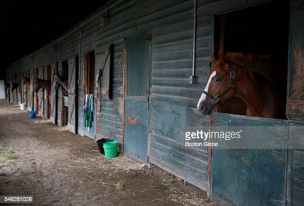 A horse stands in a stable before races at Suffolk Downs in East Boston July 9 2016 It was the first of six days of racing at Suffolk Downs this year