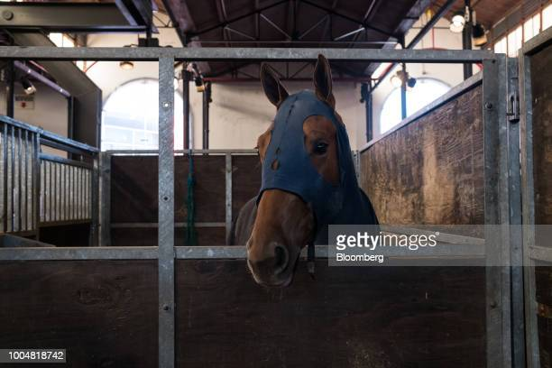 A horse stands in the equine pavilion during La Exposicion Rural agricultural and livestock show in the Palermo neighborhood of Buenos Aires...