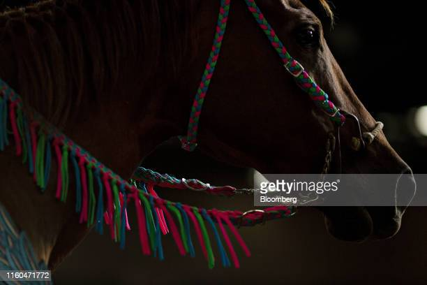 A horse stands in the Exhibition Center during a Future Farmers of America barrel racing event at the Iowa State Fair in Des Moines Iowa US on...