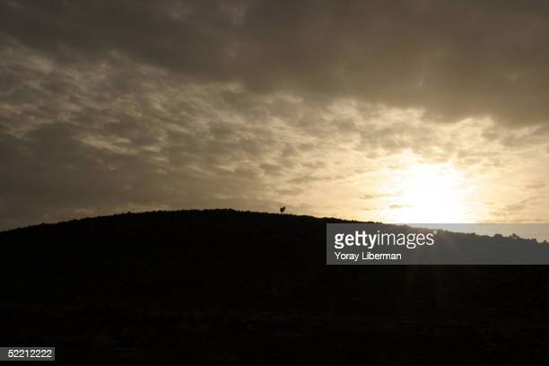 A horse stands on a hilltop near one of the villages of the landlord Nahit Koran in the district of Ekarakeci December 6 2004 near the city of Urfa...