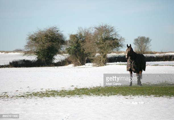 A horse stands on a patch of grass that is clear from snow in a field on December 28 2017 near Bath England A cold spell has hit Britain causing...