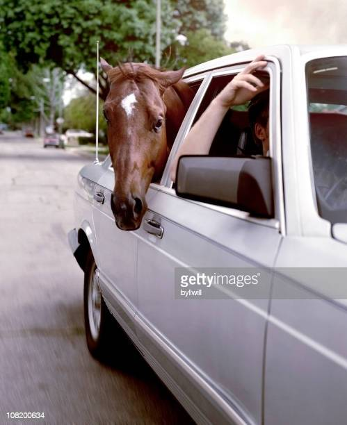 Horse Sticking Head Out of Car Window