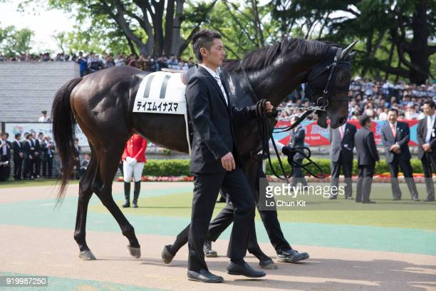 Horse T M Inazuma being led around the paddock during Tokyo Yushun at Tokyo Racecourse on May 26 2013 in Tokyo Japan Tokyo Yushun Japanese Derby is...