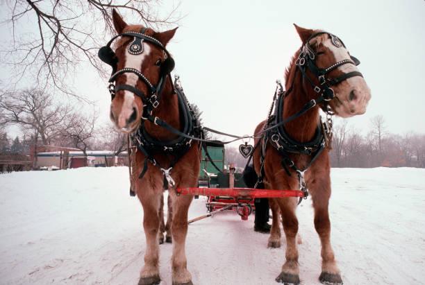 Horse Team at Winter Carnival