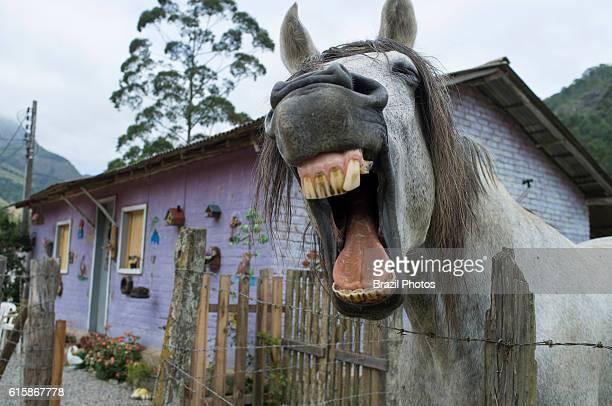 Horse teeth countryside Brazil