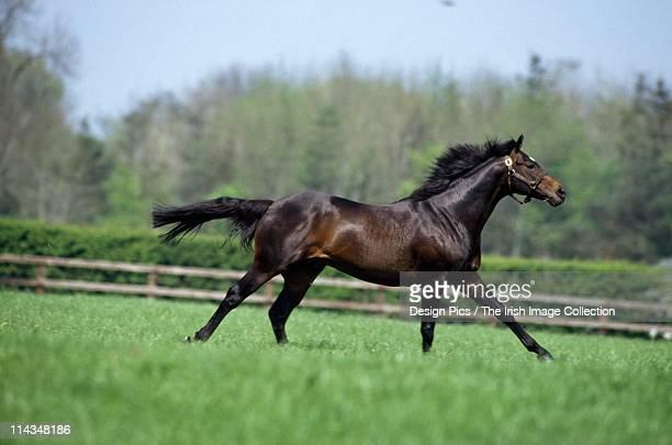Horse Thoroughbreds, Wassl 1988,