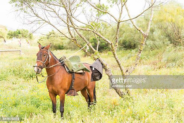 Horse tied to Tree