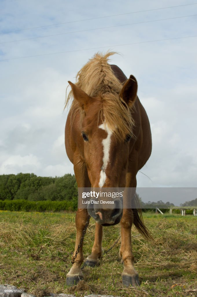 horse tied with a chain : Stock-Foto