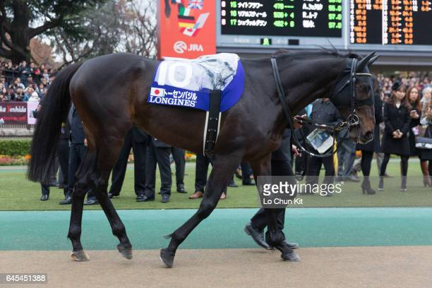Horse Tosen Basil being led around the paddock during the Japan Cup at Tokyo Racecourse on November 27 2016 in Tokyo Japan