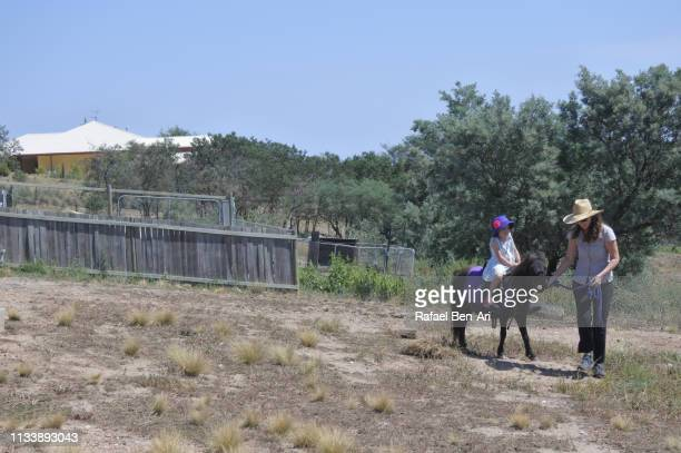 horse trainer leading a young girl on a pony horse - rafael ben ari stock pictures, royalty-free photos & images
