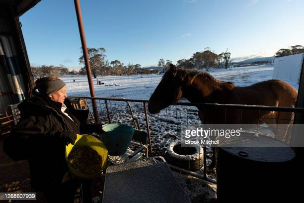 Horse trainer Nikki Alberts is pictured with the formerly Wild Brumby named Captain at the White Alpine Equine horse farm in Adaminaby on August 23...