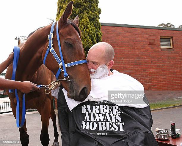 Horse trainer Peter Moody nuzzles up to Brambles when being prepared to be shaved at Peter Moody Stables at Caulfield Racecourse on October 30 2014...