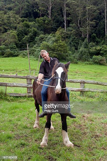horse trainer with a young shire horse - shire horse stock pictures, royalty-free photos & images