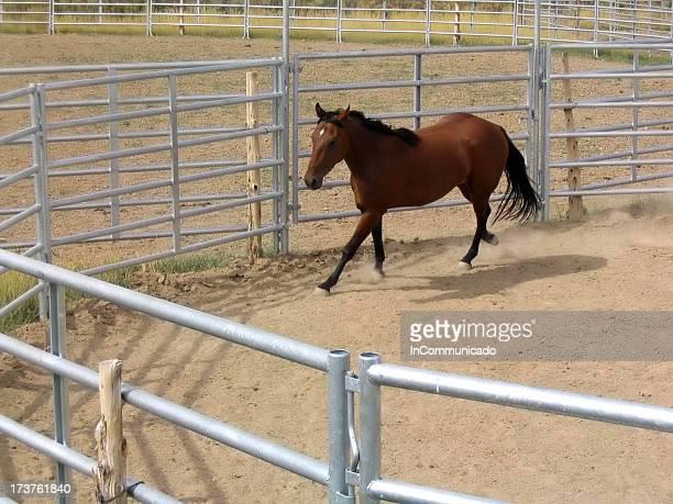 馬のトレーニング 3 - 家畜柵 ストックフォトと画像