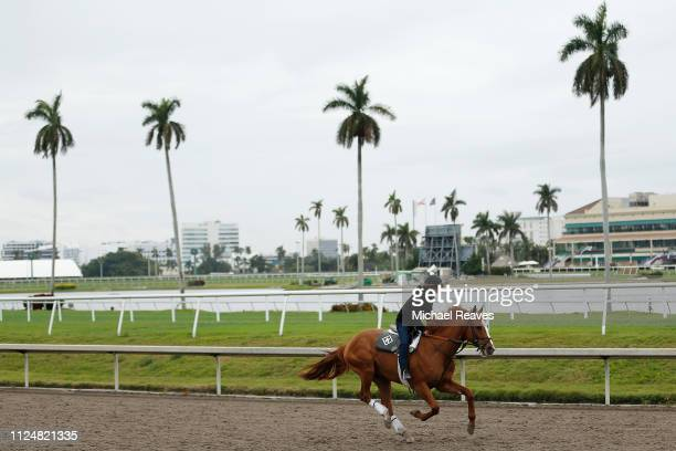 A horse trains on the track during morning workouts prior to the Pegasus World Cup at Gulfstream Park on January 25 2019 in Hallandale Florida