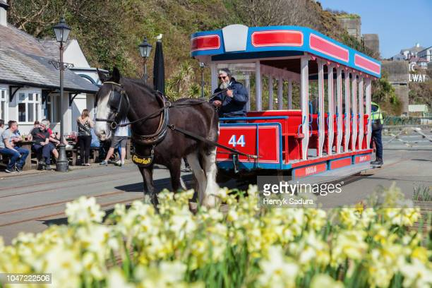 horse tram in douglas - isle of man stock pictures, royalty-free photos & images