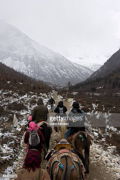 Horse trek towards the mountain Jambeyangi the deity of wisdom one of three holy mountains for Buddhists in Yading a reserve in southwest Sichuan...