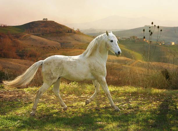 Horse Trotting In A Field Wall Art