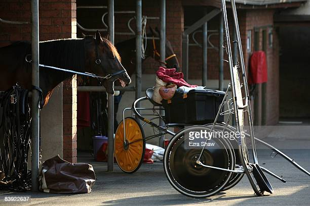 A horse waits in the stables for harness racing at Harold Park on December 5 2008 in Sydney Australia Harold Park opened in 1902 and in 1960 it had a...