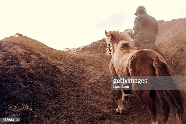 Horse walking in Iceland