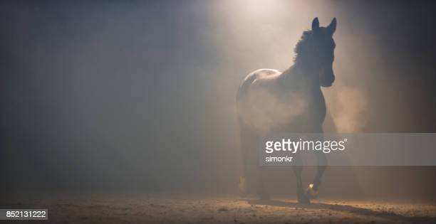 horse walking through mist at night - horse racecourse stock photos and pictures