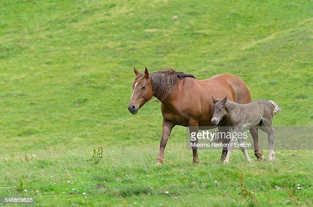Horse Walking With Foal On Grassy Landscape