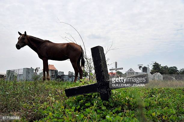 Horse walks next to crosses at the cemetery of La Macarena, Meta department, Colombia, on February 23, 2016. Between 1998 and 2002, during the failed...