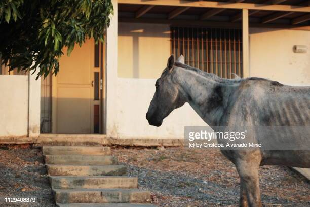 Horse Watching House