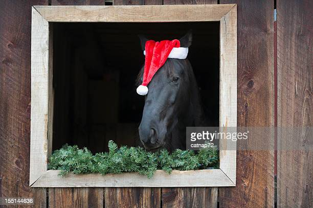 horse wearing santa claus hat in barn window - christmas horse stock pictures, royalty-free photos & images