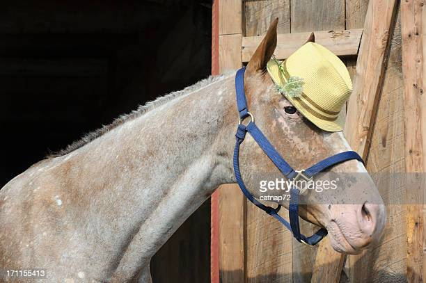 horse wearing yellow straw fedora hat, head shot - appaloosa stock pictures, royalty-free photos & images
