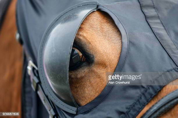 A horse wears blinkers at Lingfield Park racecourse on March 3 2018 in Lingfield England