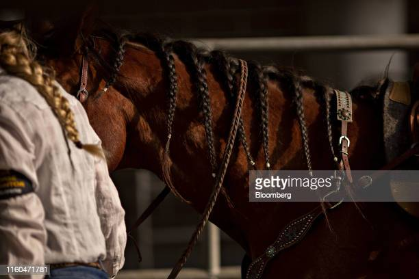 A horse with a braided mane is led from the Exhibition Center after competing in a Future Farmers of America barrel racing event at the Iowa State...