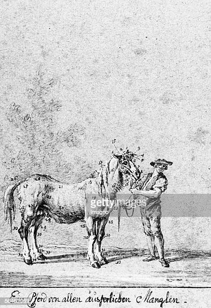 Horse with all kinds of exterior faults Drawing pencil quill brush washed By Johann Elias Ridinger About 1750 [Ein Pferd von allen aeusserlichen...