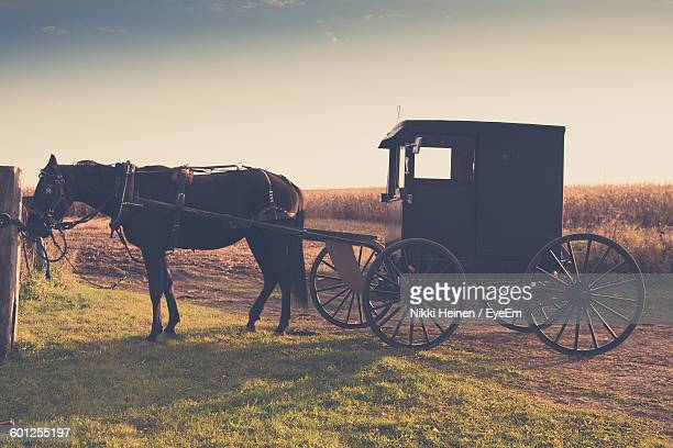 Horse With Cart Standing On Field Against Sky