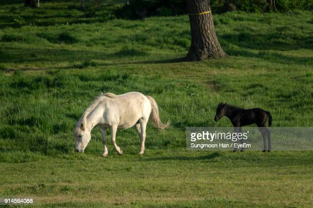 Horse With Infant Standing On Field