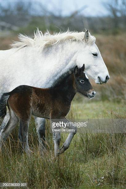 Horse with it's foal in field, side view