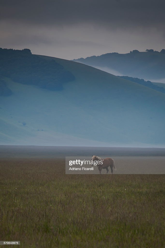 A horse with no name : Foto stock