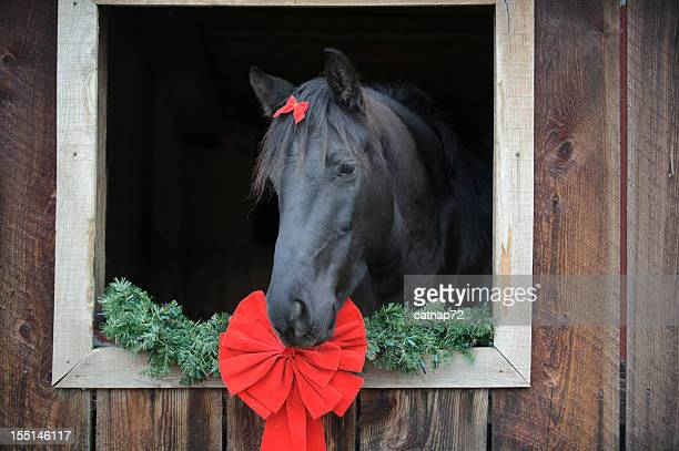 horse with red ribbon bow framed in barn window - christmas horse stock pictures, royalty-free photos & images