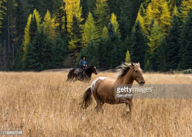 horse without rider running in grass field  montana - montana western usa stock pictures, royalty-free photos & images