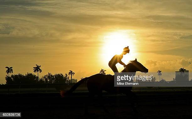 A horse works out ahead of the $12 Million Pegasus World Cup at Gulfstream Park on January 27 2017 in Hallandale Florida