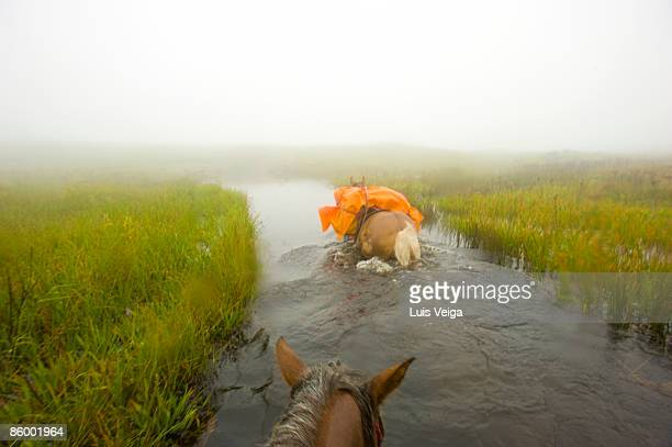 Horseback cross a river in fog during a pack trip