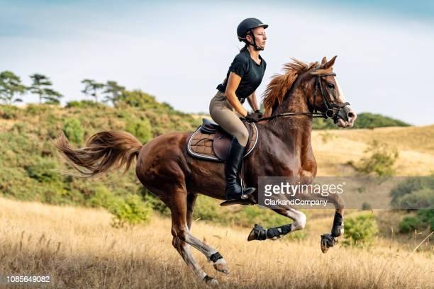 reiterin auf ihrem pferd. - pferderitt stock-fotos und bilder