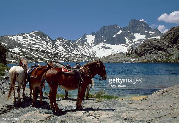 horseback riding at thousand island lake in the ansel adams wilderness, california - john muir trail stock photos and pictures