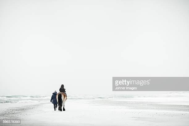 horseback riding at winter - faro sweden stock pictures, royalty-free photos & images