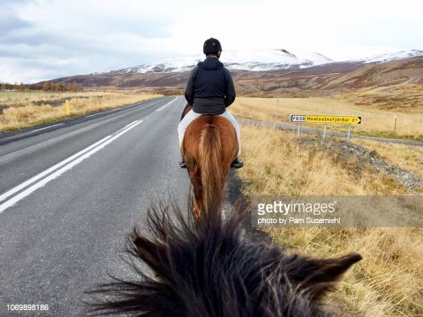 horseback riding in northern iceland - recreational horseback riding stock pictures, royalty-free photos & images