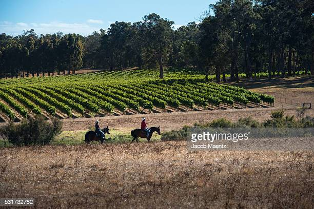 Horseback riding in Western Australia's wine country